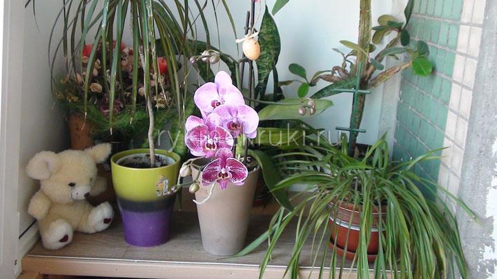 фото орхидей в интерьере квартиры